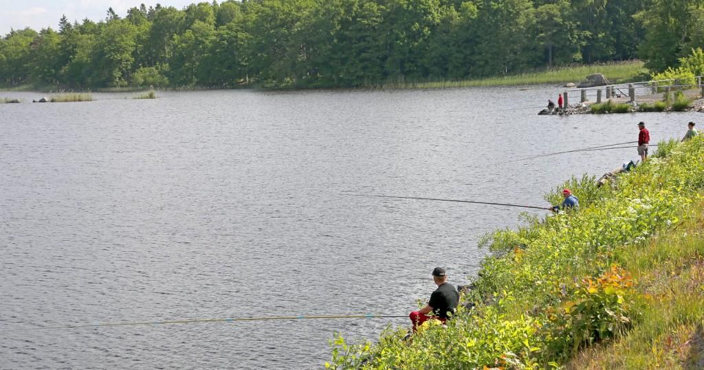 Fiskafänge vid Torne bro.